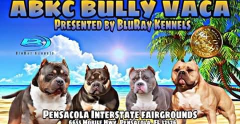 ABKC BULLY VACA PRESENTED BY BLURAY KENNELS