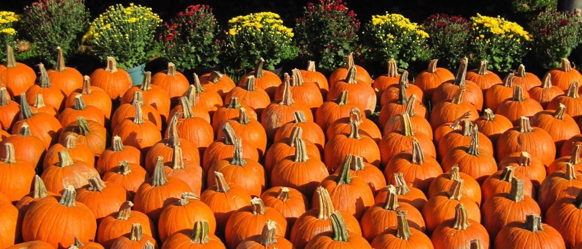 Pumpkins And Praise Fall Festival Free Family Fun