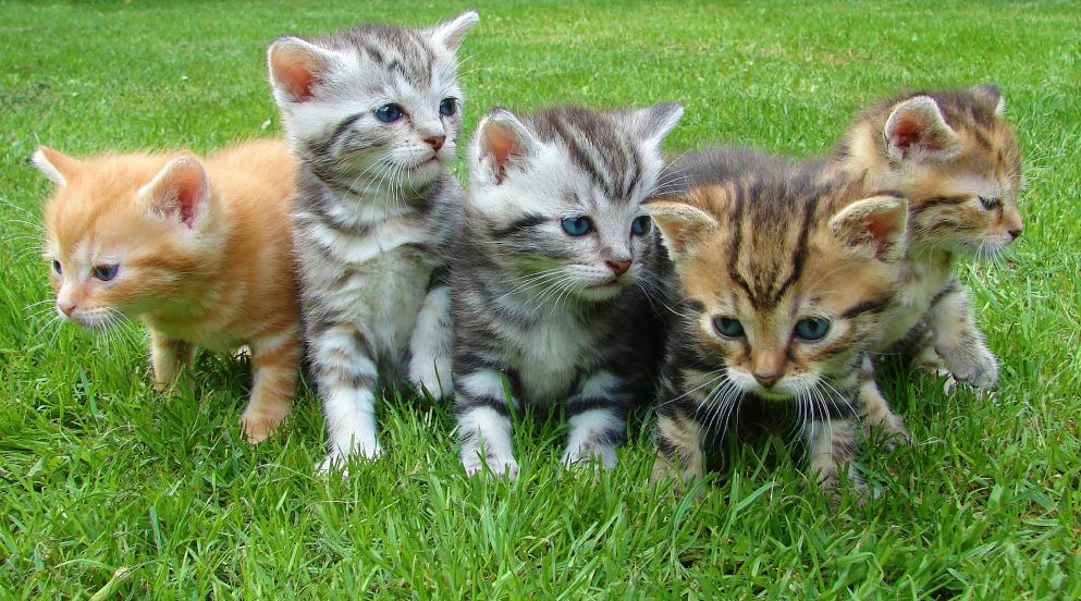 Celebrate kittens at the Kitten Karnival in Pensacola!