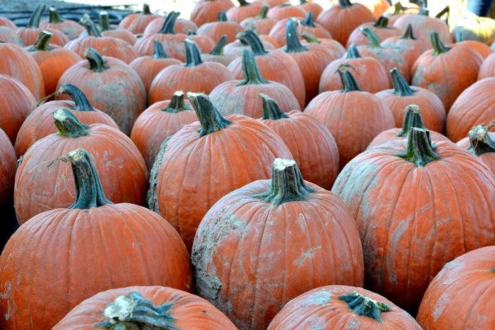 Weekend Fun: Find A Pumpkin Patch Near Pensacola