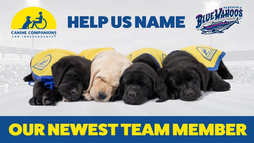 Pensacola Blue Wahoos seek help in naming new service dog in-training