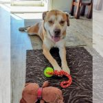 Pet Adoption In The Pensacola Area: See New Dogs, Cats & More