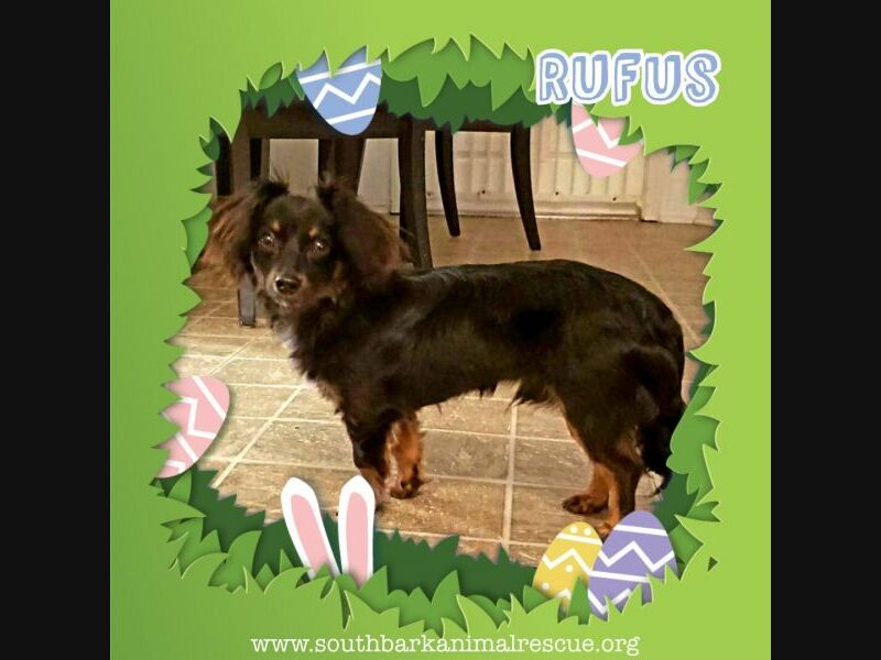 Pensacola Adoptable Pets: Meet Rufus, Lulu, Sparrow & More