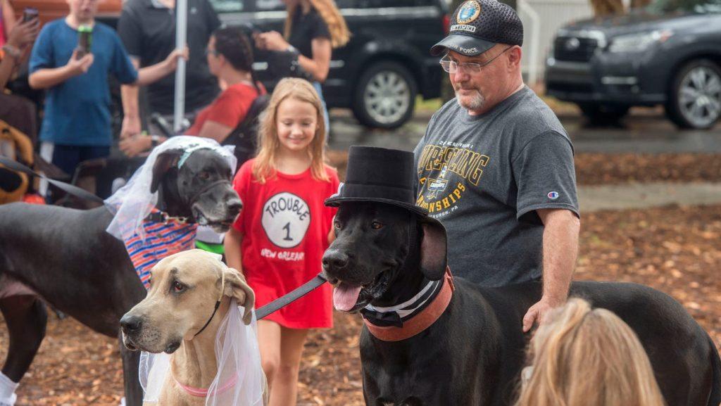 Danetoberfest bringing 2 dozen gentle giants downtown Pensacola for dog-friendly festival